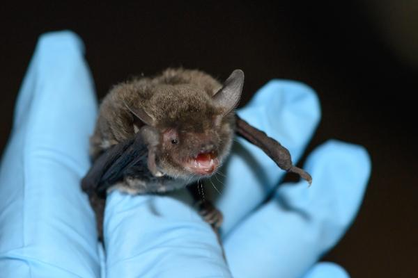 Bat held in a gloved hand while being checked.