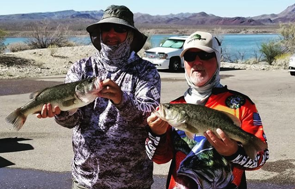 Alamo Lake Bass Fishing