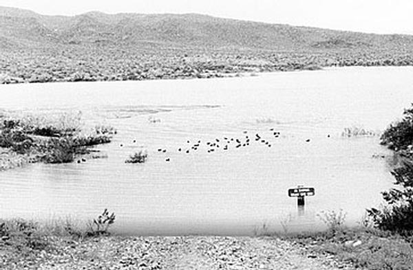 Alamo Lake State Park Historical Photo. Flock of ducks on water.