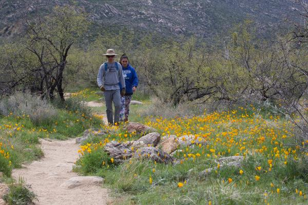 Two people hike along a trail lined with poppies in Catalina State Park.