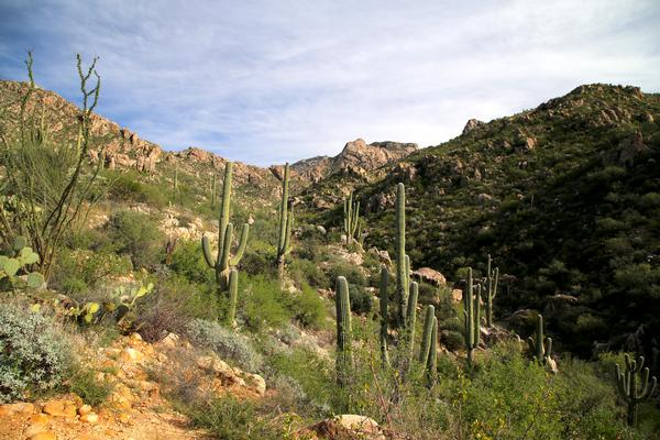Arizona Hiking at Catalina State Park, with saguaro cactus and the Catalina mountains.