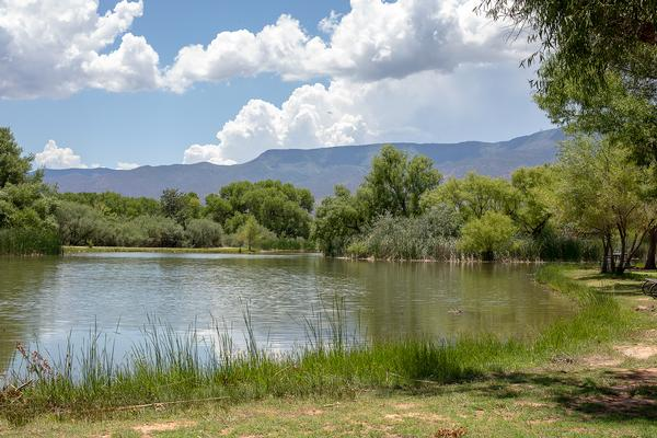 Camping in Arizona: Dead Horse Ranch State Park