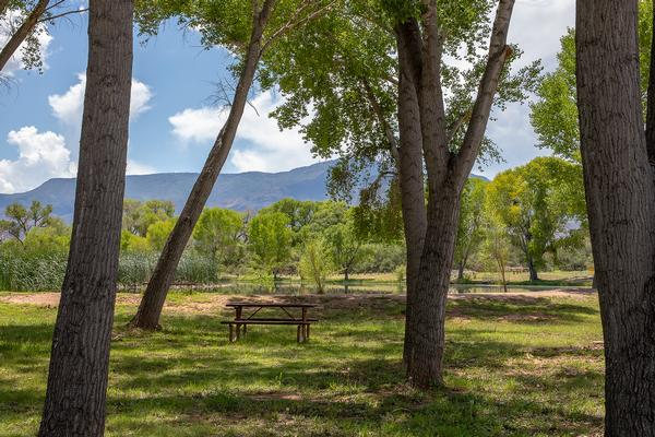 Lush Greenery Of Dead Horse Ranch State Park