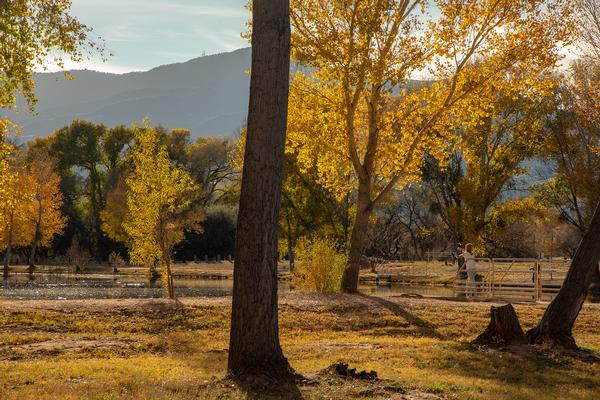 Bright yellow leaves surround the lagoon where a woman fishes at Dead Horse Ranch State Park.
