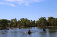 Kayakers on the Verde River at Dead Horse Ranch State Park