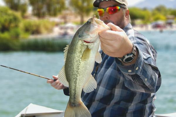 Lake Havasu Largemouth Bass