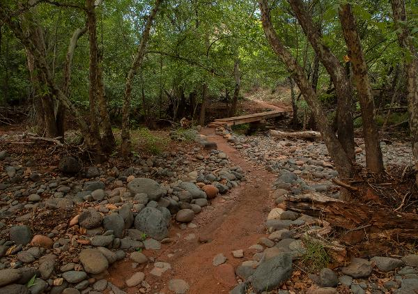 A trail winds through green overhanging trees along the river in Red Rock State Park