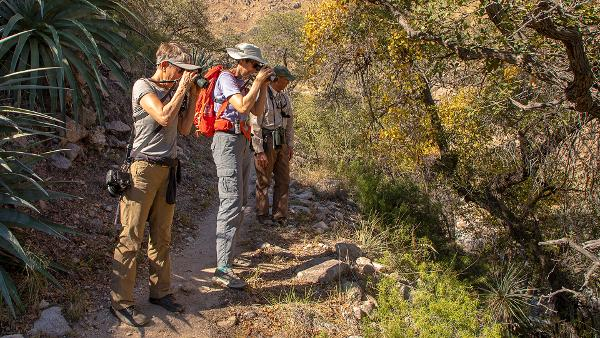 Arizona fun outdoor activities- Birding in Arizona