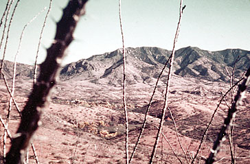 The foothills viewed through Ocotillo in 1974