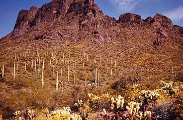Picacho Peak in 1963