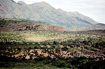 Sonoita Creek State Natural Area in 1993